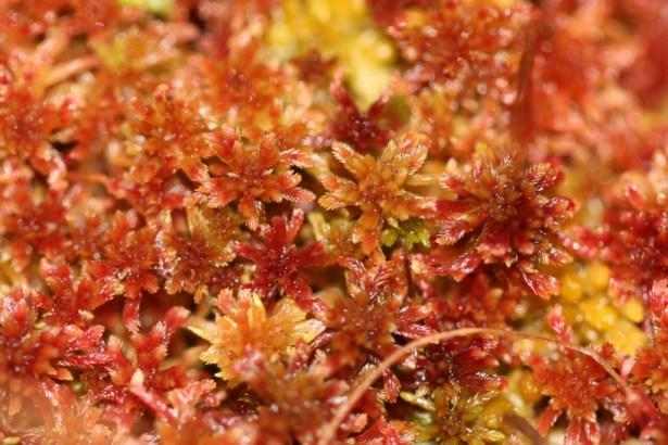 Stunning Sphagnum moss