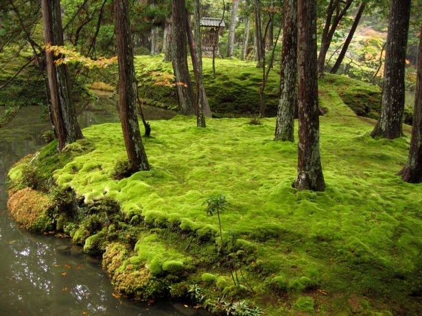 Kokedera Moss Garden