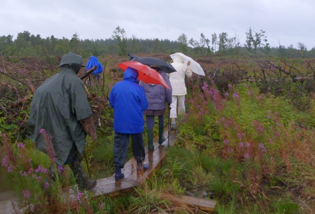 Our hardy bunch of foragers, ndeterred by the rain